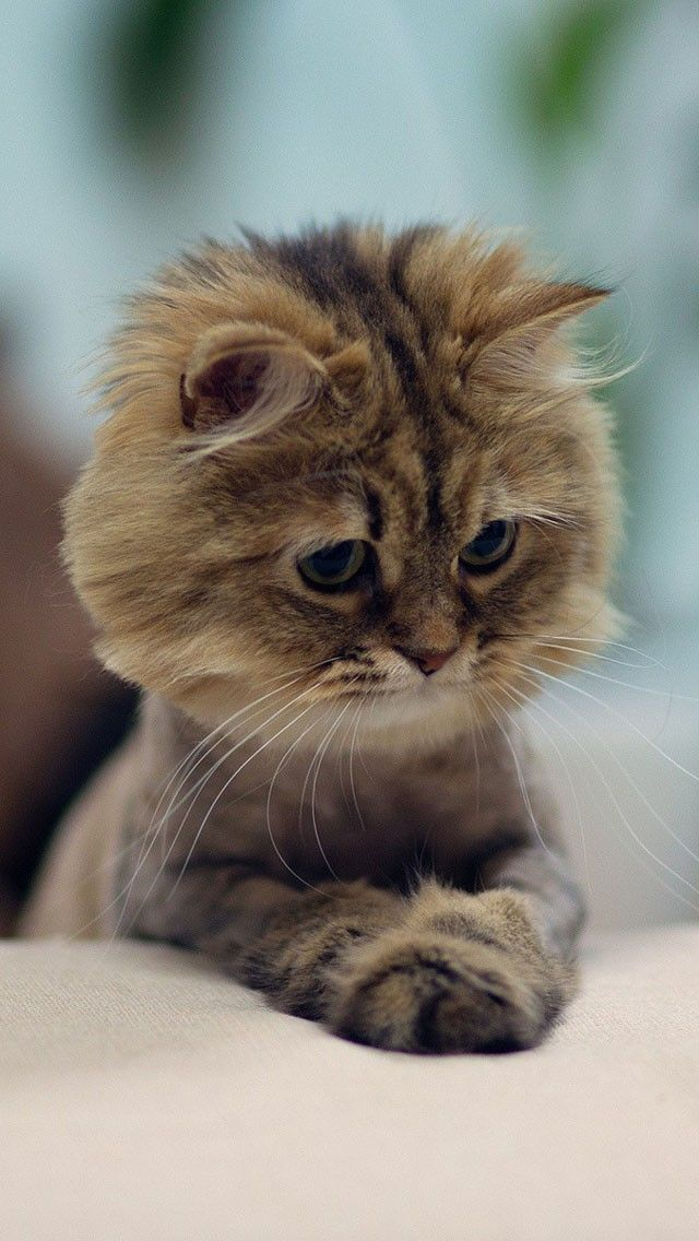 Pin by Christine Huffman on cats Cute cats, Cute animals