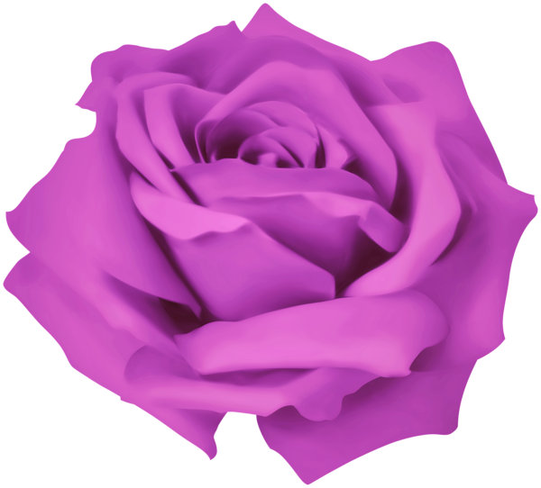 Purple Dreamy Rose Png Clipart Clipart Dreamy Png Purple Rose Clip Art Free Clip Art Purple Roses