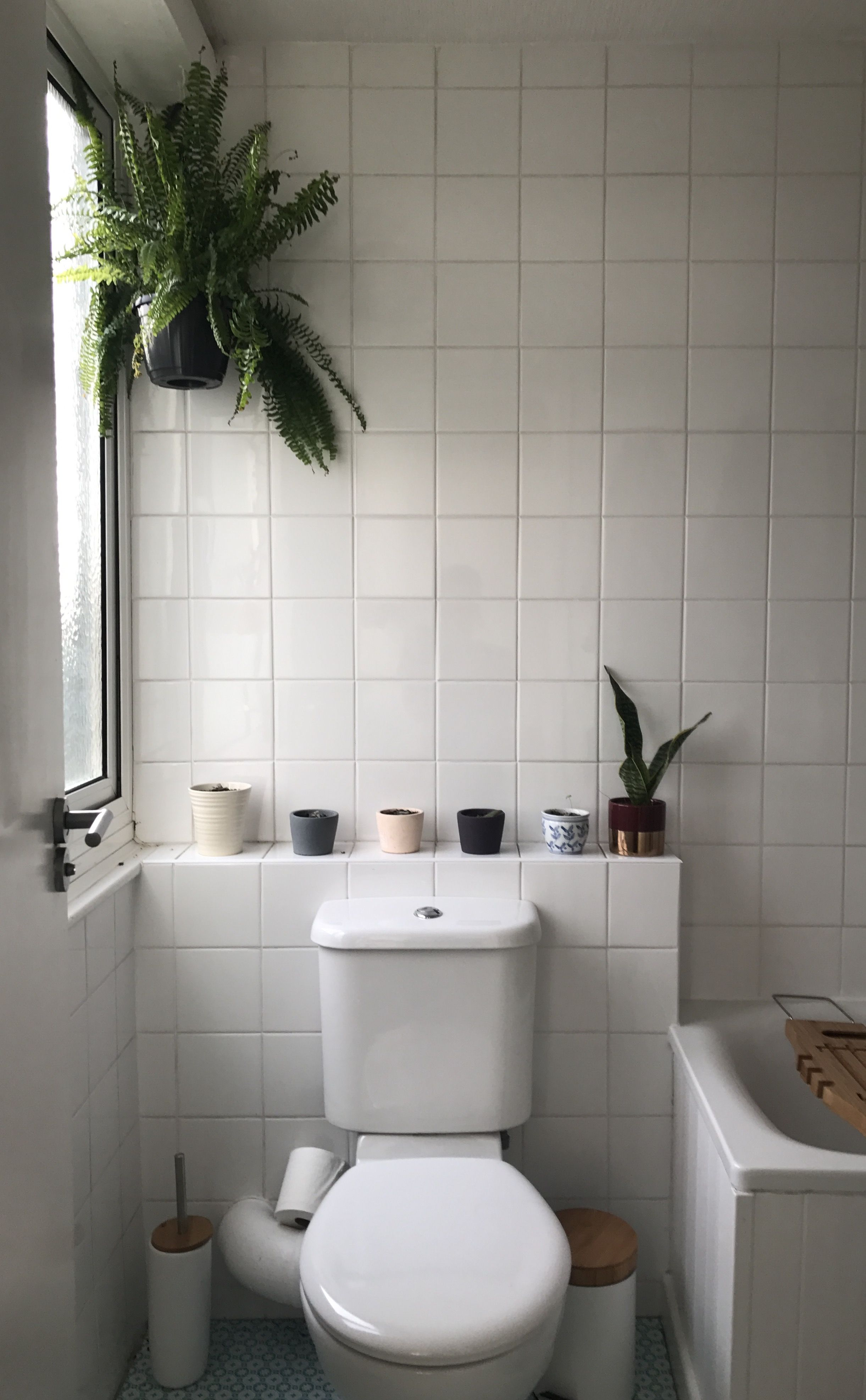 Bathroom Plants Brighten Up The Hardest To Decorate Room With