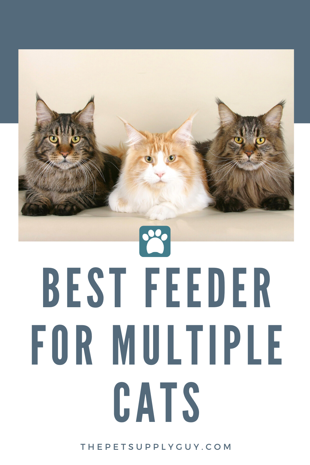 Best Automatic Cat Feeder for Multiple Cats in 2020