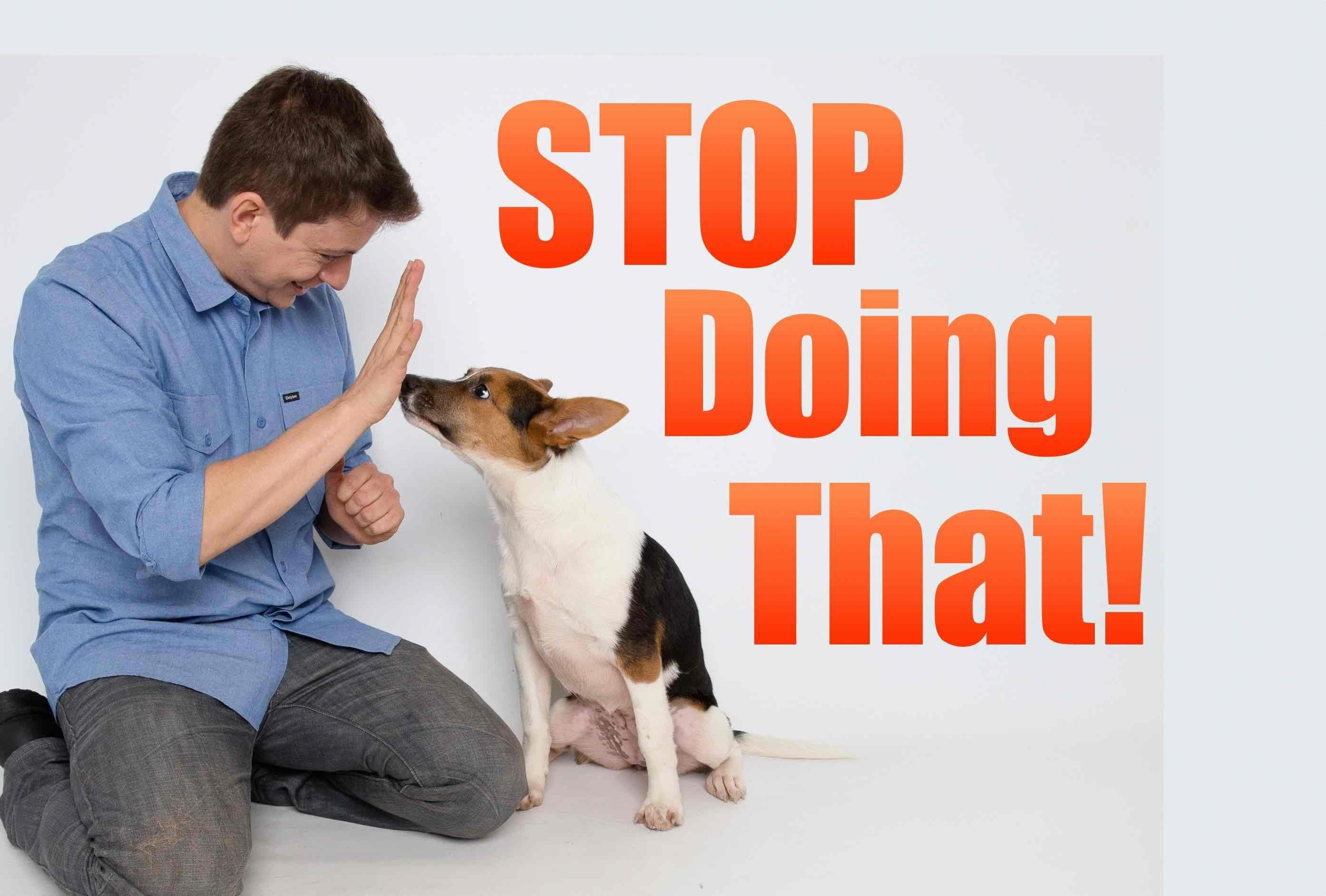 dog training how to; You could possibly tell what the