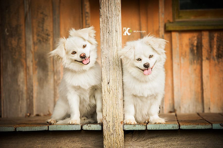 Photo Of Hudson Kuma Taken By Diana Of K9 Photography Australia Animal Photography Dog Photography Pet Portraits