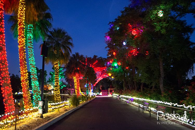 Phoenix Zoo Lights Sneak Peek Posh In Progress Zoo Lights Travel Photography Christmas Light Installation