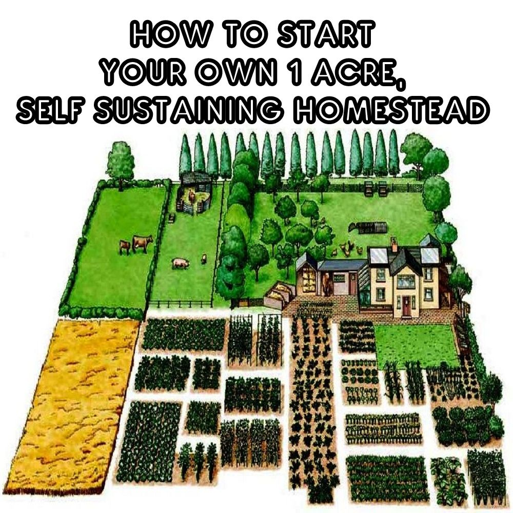 How To Start Your Own 1 Acre Self Sustaining Homestead Farm Layout Farm Plans Acre Homestead