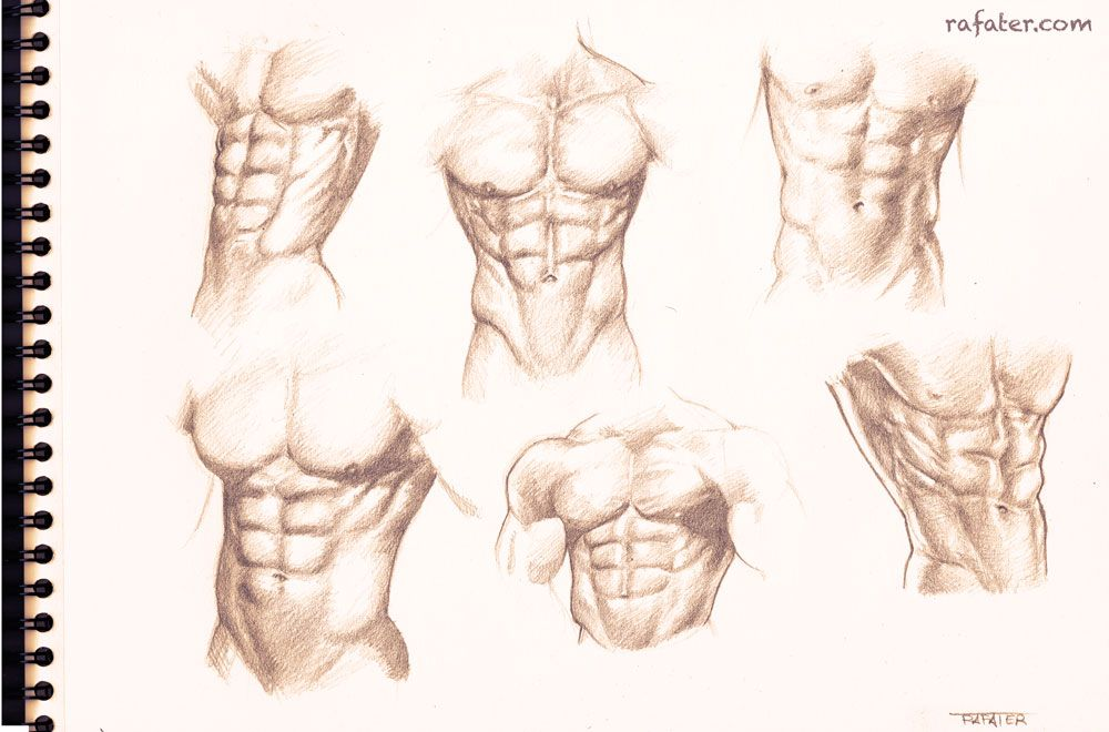 Male+torso+study+for+the+six+pack+lovers+by+rafater.deviantart.com+ ...