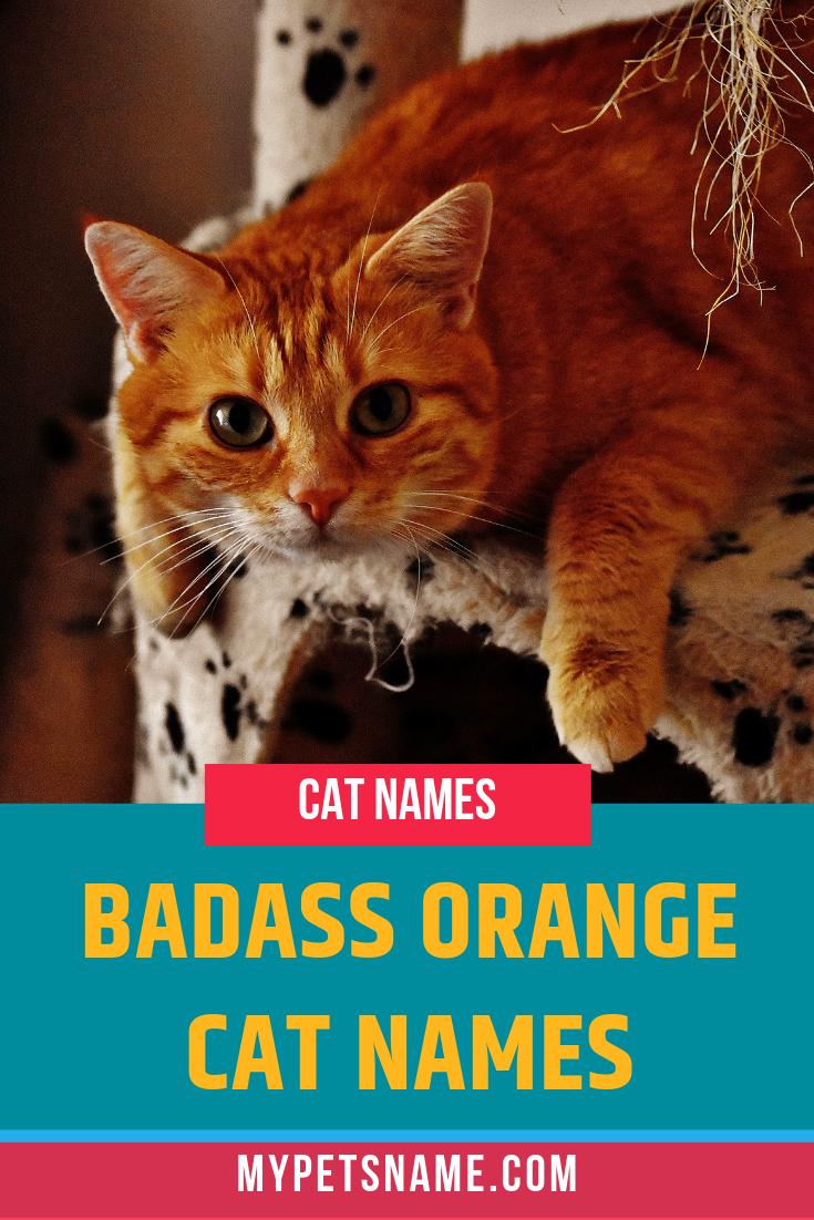 Badass Orange Cat Names Cat Names Tabby Cat Names Orange Cats