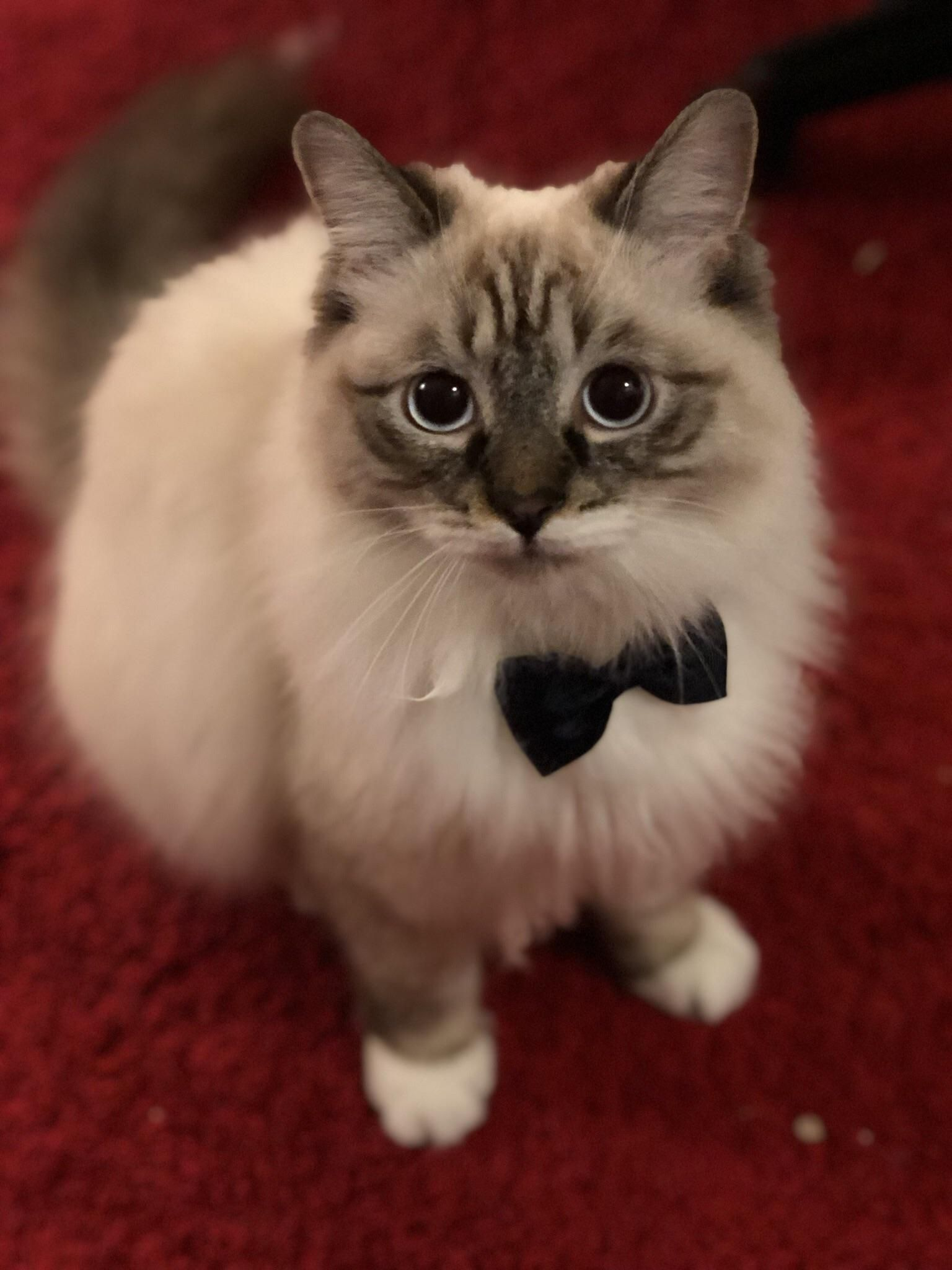 Formal Cute Cats And Dogs Cute Cats Funny Cats And Dogs