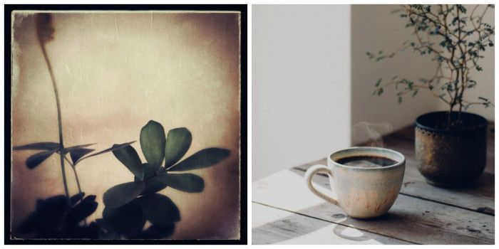 nature by nature plants and coffee collage