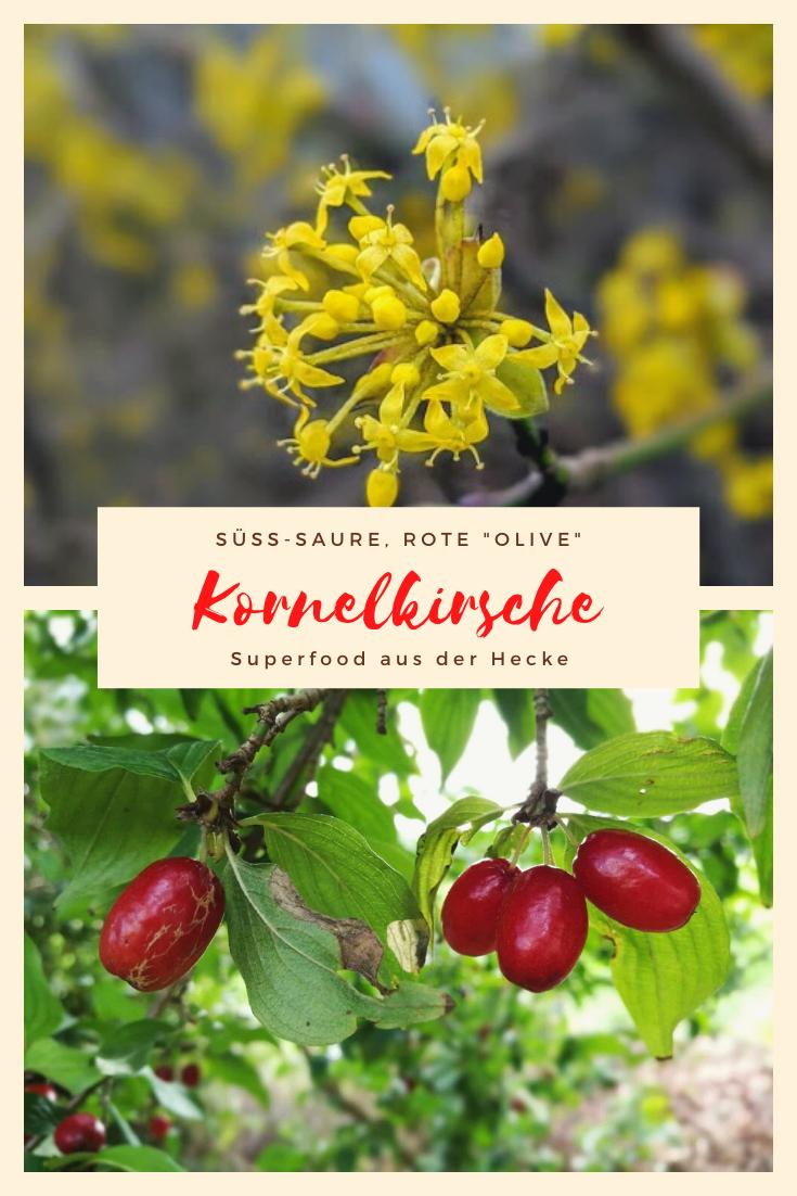 Die Kornelkirsche Die Suss Saure Rote Olive Aus Der Hecke In 2020 Kornelkirsche Fruchtchen Fruchte