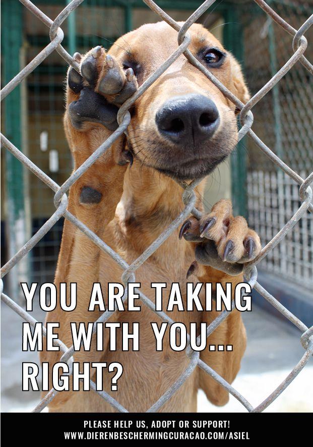 Steun De Dieren Op Curacao Echt Alle Beetjes Helpen Doneer Vanuit Nederland Op Stichting Dierenbescherming Curacao Ing Bank Iban Shelter Tierheim Curacao