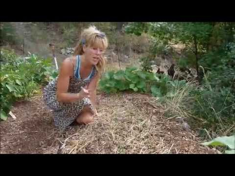 Back To Eden Gardening How To Grow Leafy Greens Youtube Pnw Garden Lasagna Gardening Garden Plants