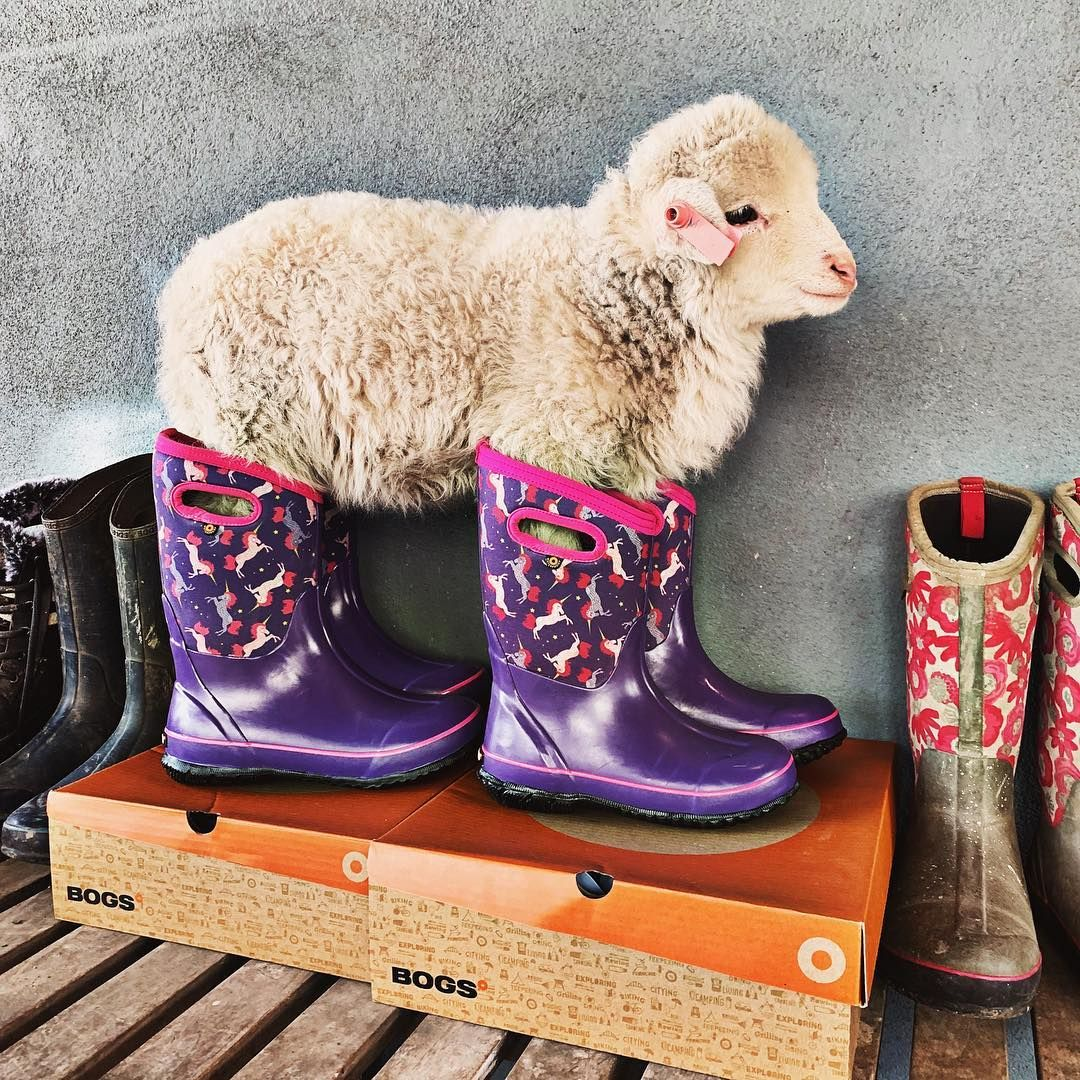 Everyone loves Bogs unicorn boots