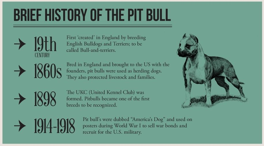 october is national pitbull awareness month Google