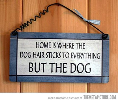 So true - Home is where the dog hair sticks to everything BUT the dog. ~home/dog saying/quote/sign  sc 1 st  Pinterest & Dog owners will know\u2026 | McKinley | Pinterest | Dog Animal and Doggies