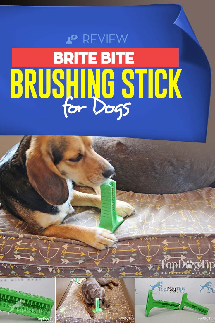 Review Brite Bite Brushing Stick for Dogs Dogs, Dog
