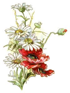 Victorian Flowers Clip Art Vintage Daisy Poppy Image Antique Floral Illustration Red And White Digital Download