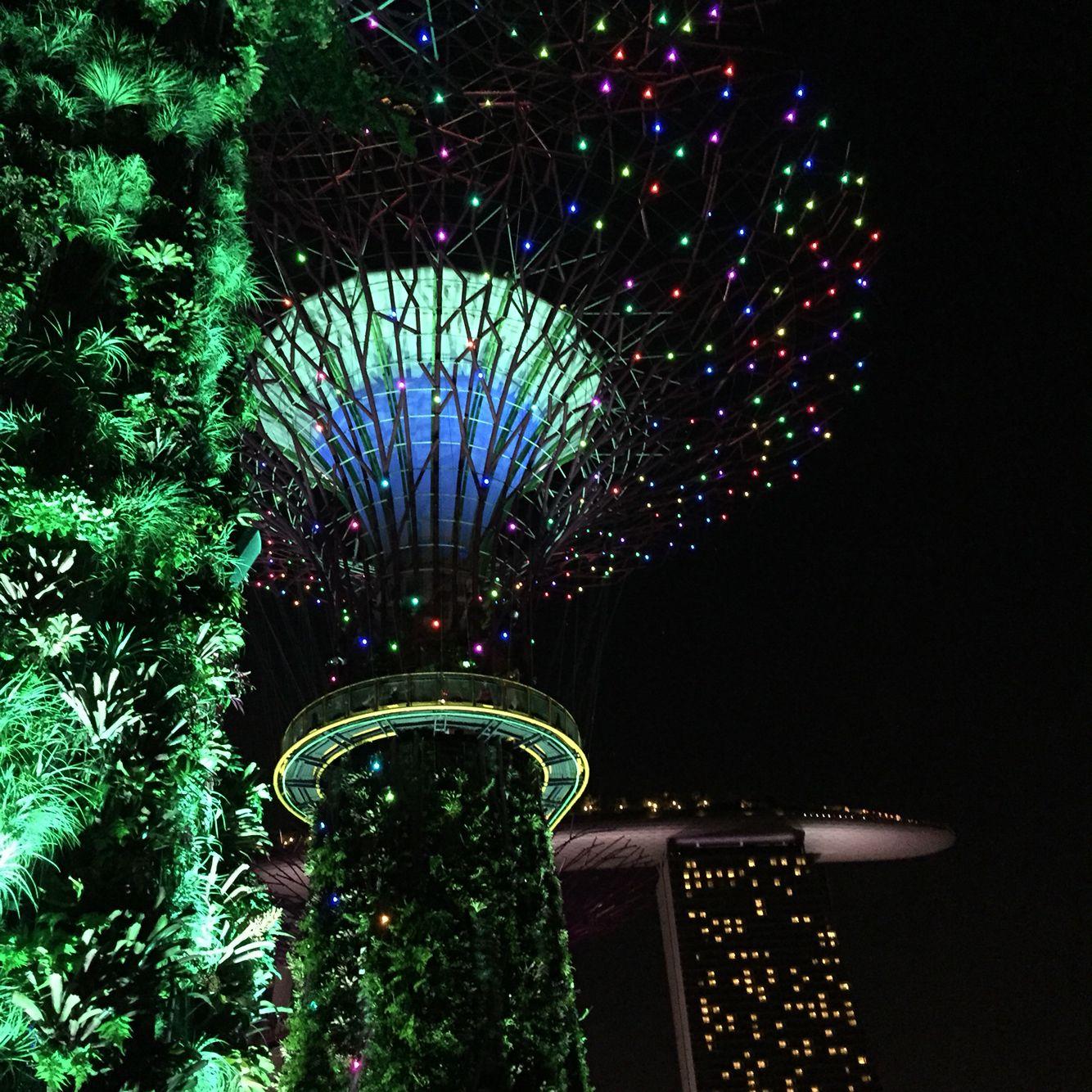 Christmas Wonderland, Gardens by the Bay Singapore | Christmas wonderland, Singapore, Gardens by ...