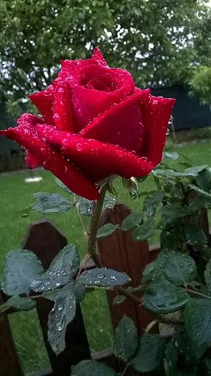 Pin by bogumila lukasiewicz on kwiaty pinterest beautiful