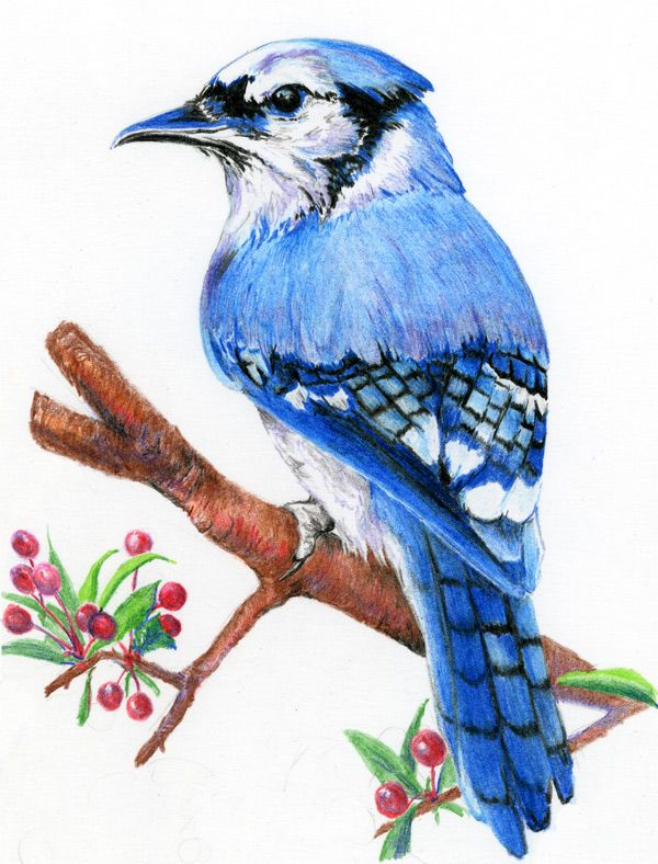 Colored pencil is a new medium for me and I am delighted ...