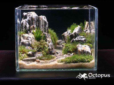 Beautiful aquascape bringing a desert canyon under the for Arredamento acquario