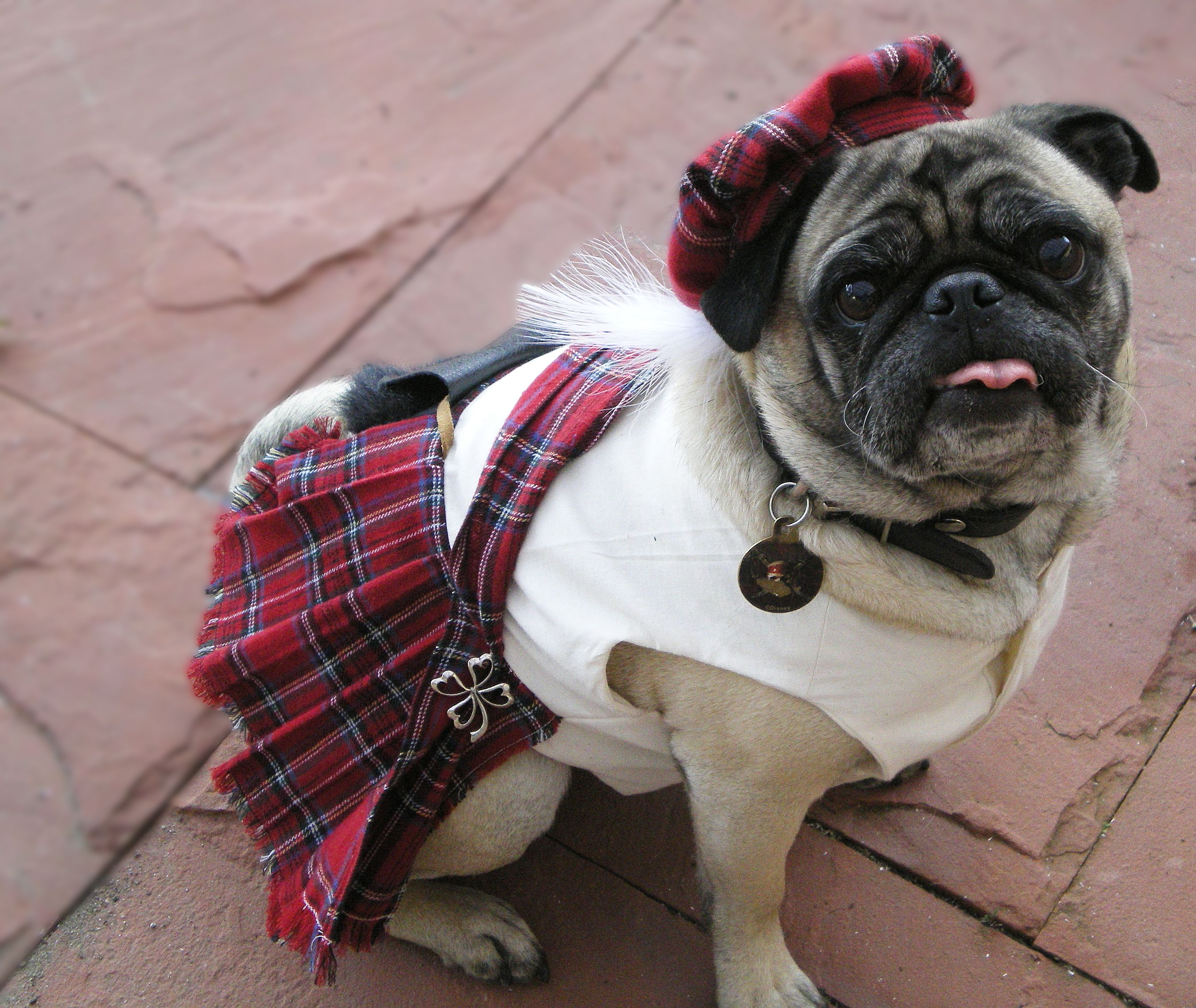 I Want A Grumble Right Now Grumble Of Pugs Pugs