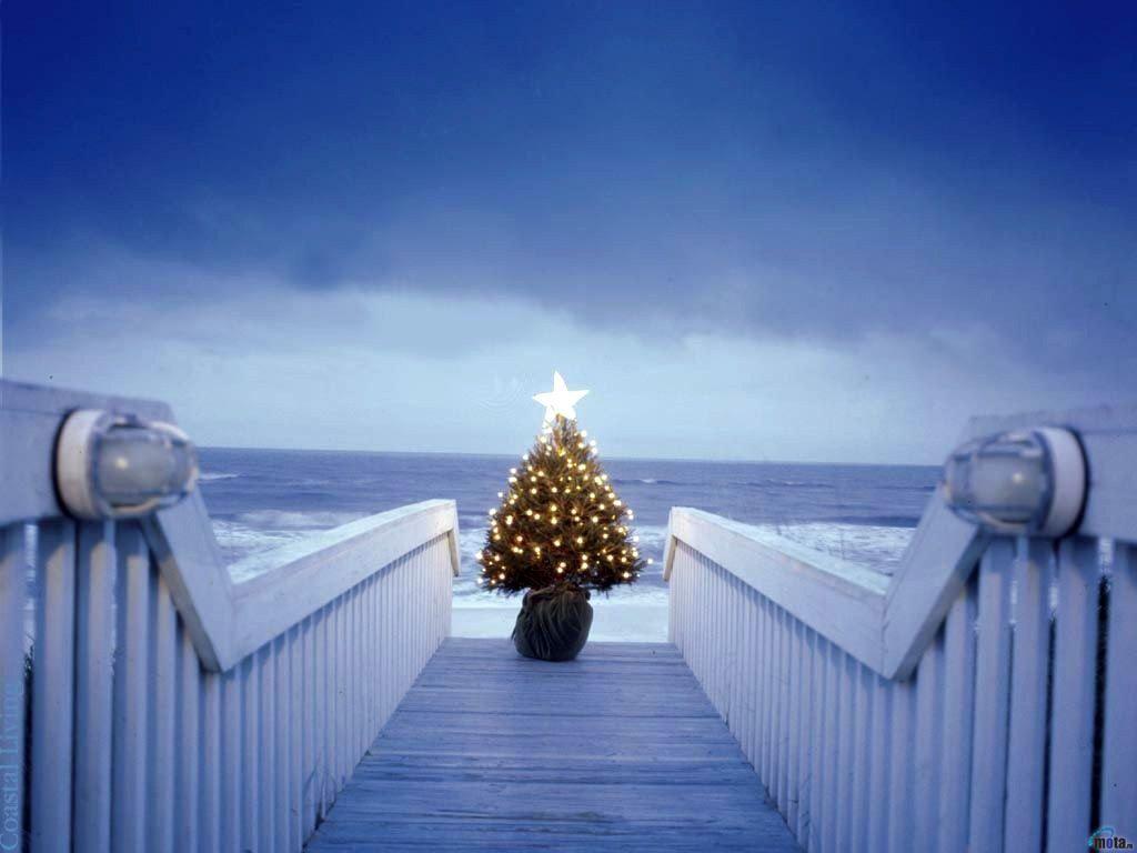 6 Christmas Wallpapers Free Beautiful Christmas Tree Lights Wallpaper1 Jpg 1024 768 Coastal Christmas Tree Beach Christmas Beautiful Christmas Trees