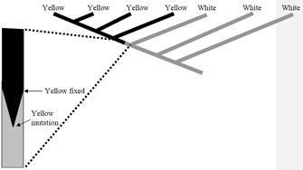 This phylogenetic tree diagram is composed of a diagonal line with this phylogenetic tree diagram is composed of a diagonal line with six diagonal lines branching ccuart Image collections