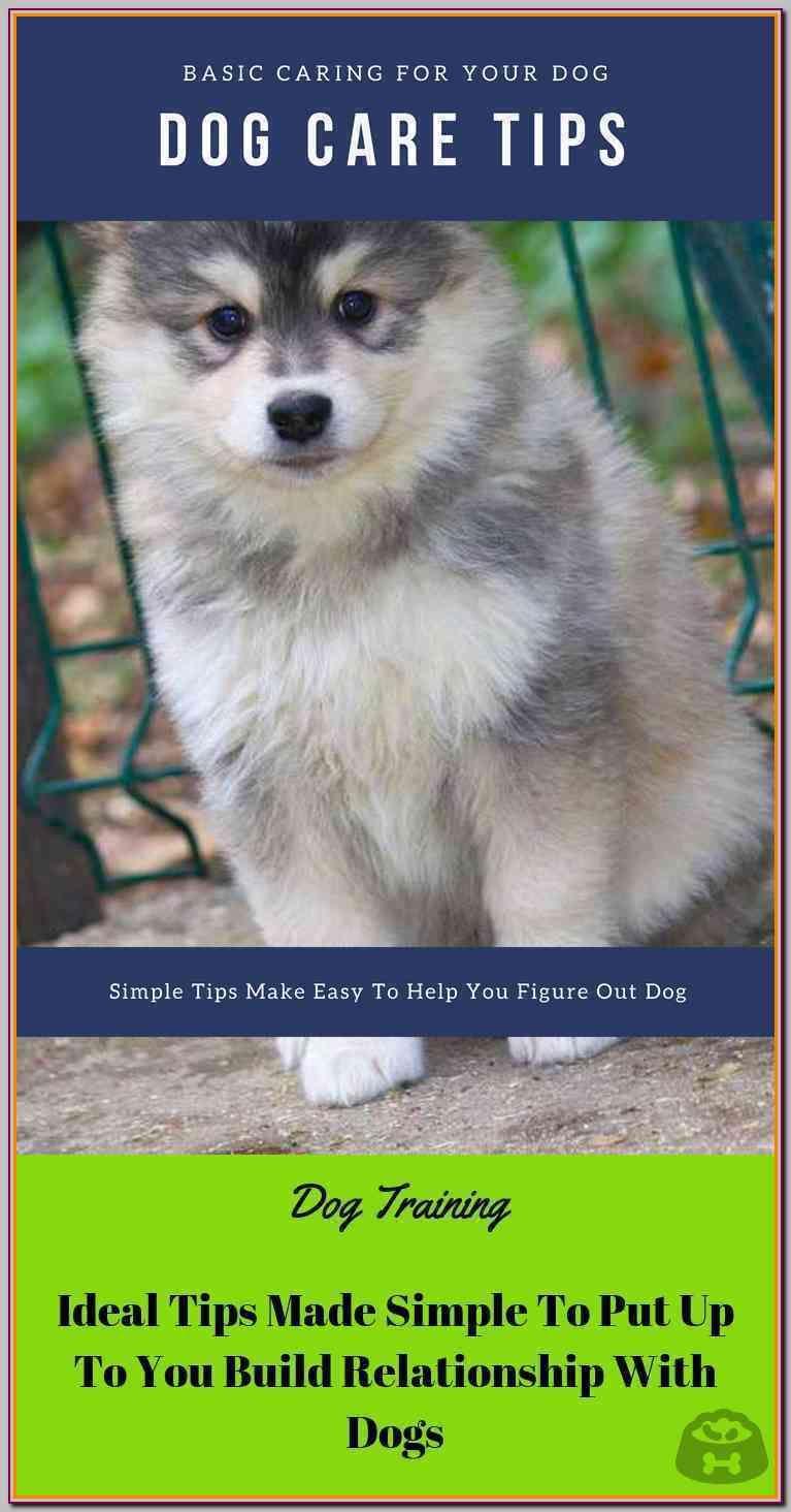 Try These Dog Training Tips For Maximum Success Dog Training Big Dog Care Sick Pets