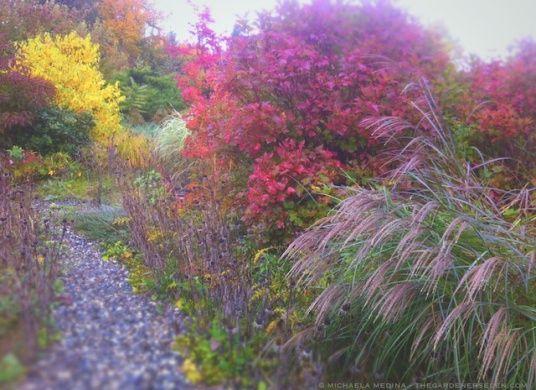 Michaela Harlow took this stunning shot of her garden--(more on thegardenerseden.com) with an iPhone!