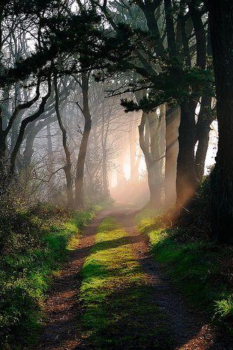 Toutes les tailles | Godolphin Woods, Cornwall | Flickr : partage de photos !