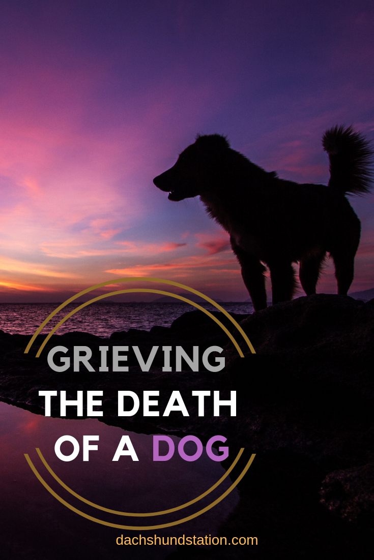 How To Cope With The Loss Of A Dog Losing a dog