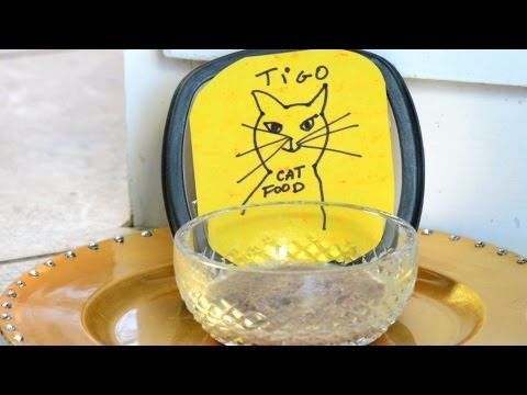 ▶ Homemade Cat Food : How to Make Cat Food - YouTube Ground beef & water