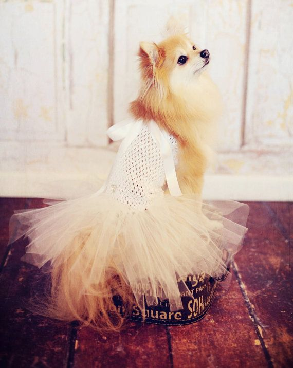 Dog TuTu Wedding Dress For Toy Breeds Hair Bow By Frillypaws 2300