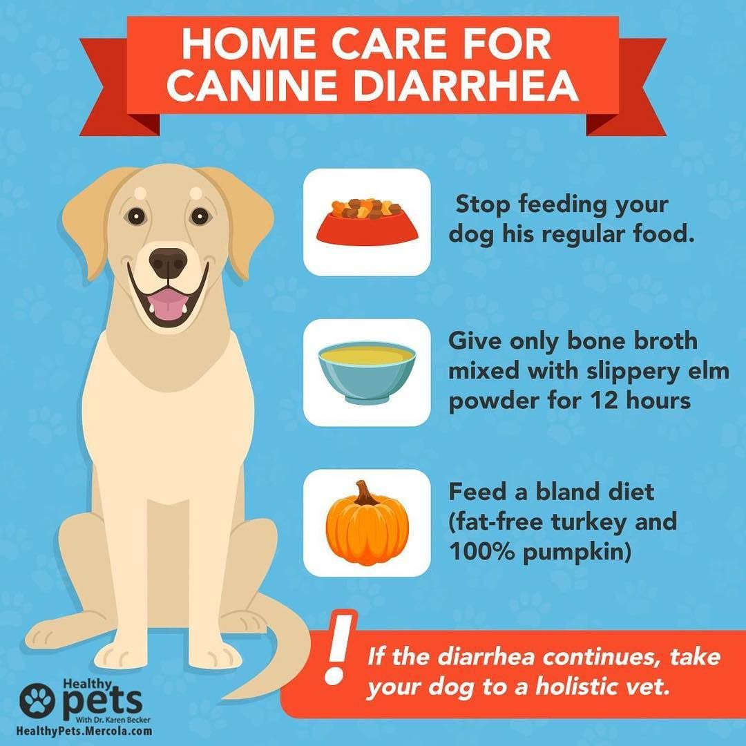 how to stop dog diarrhea with pumpkin