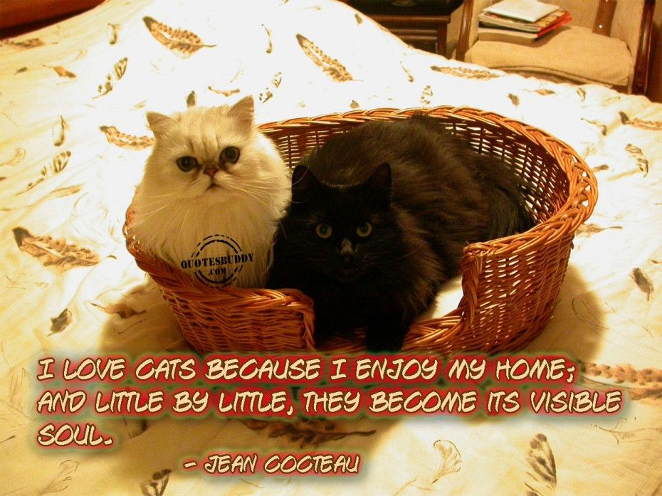 Animal Quotes Animal Picture The Cats In The Basket With Quote Animal Quotes Cats Animals