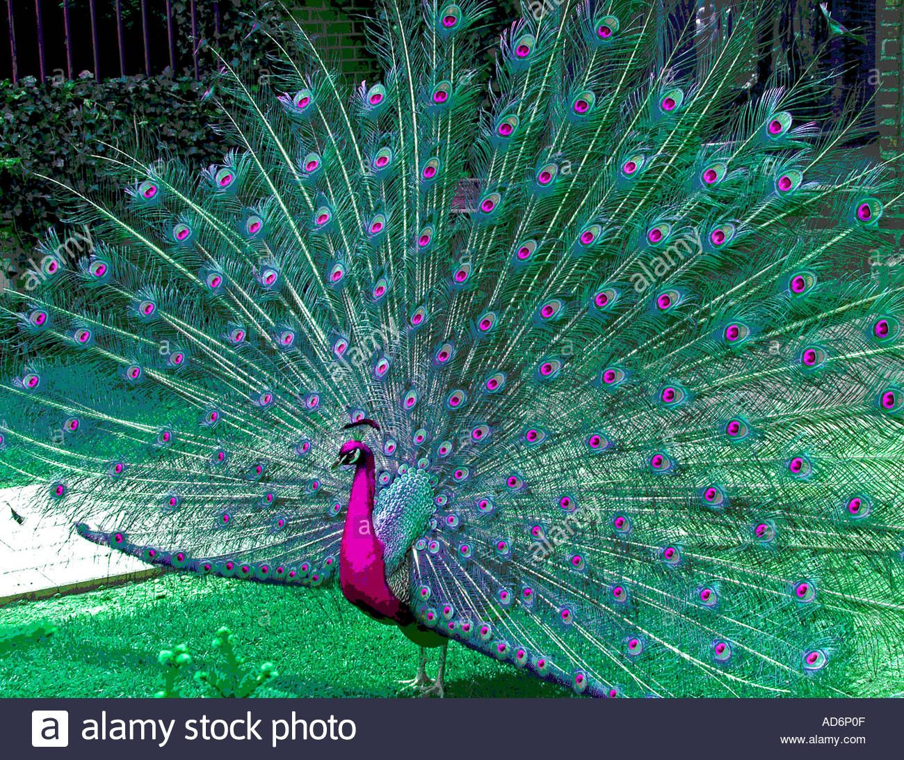 peacock-grounds-for-sculpture-park-new-jersey-usa-north-america-AD6P0F.jpg (1300×1092)