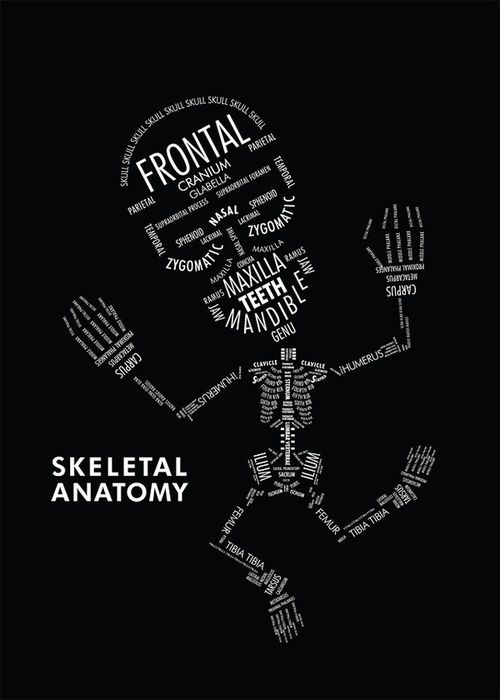 Anatomy and Physiology skeleton infographic... This would have been ...