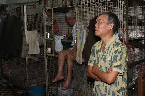 meaning tues cage dwellers - 500×333
