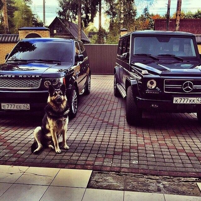 What my garage will look like without the dog