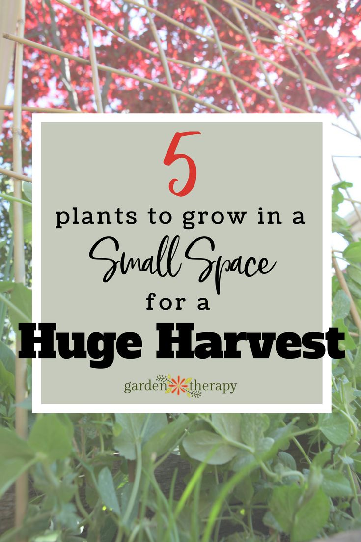 The 5 Best Small Space Vegetables To Grow Mountains Of 400 x 300