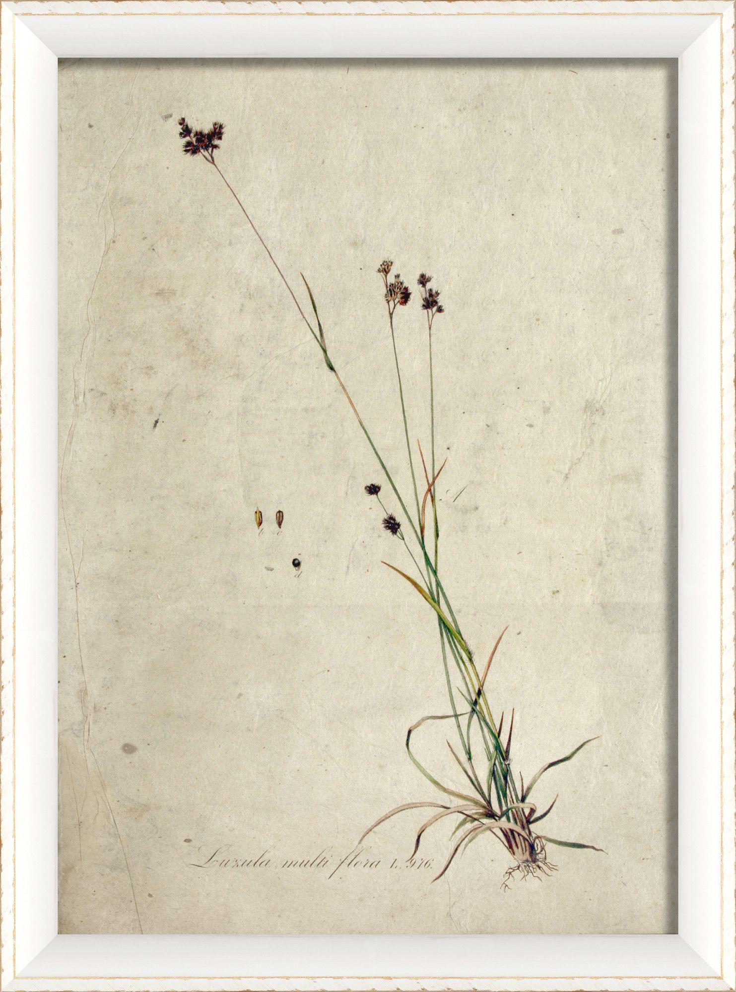 Blueprint Artwork Botanical Framed Art//