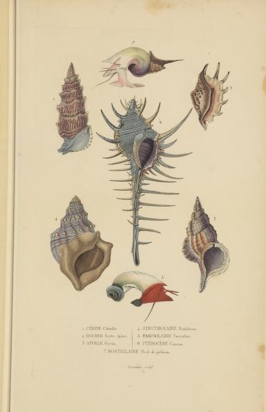 1853 Dictionnaire Classique Des Sciences Naturelles Presentant