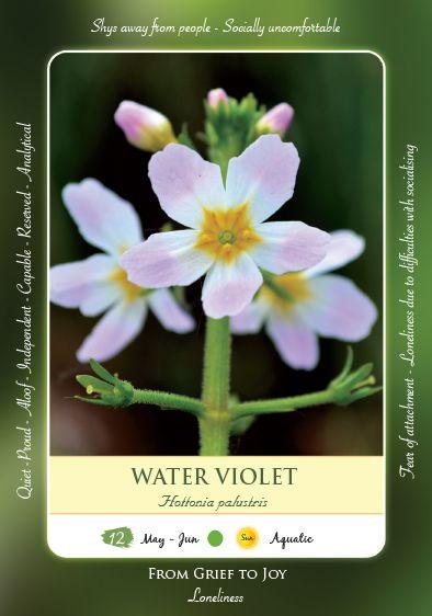 Bach Flower Cards Water Violet Cartoes De Flores Flores Homeopatia