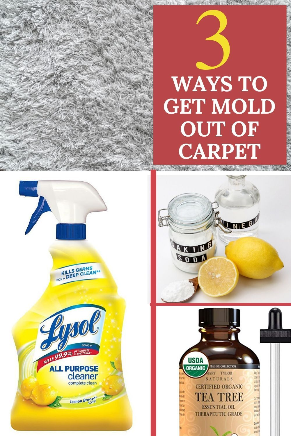 3 easy ways to get mold out of carpet in 2020 mold