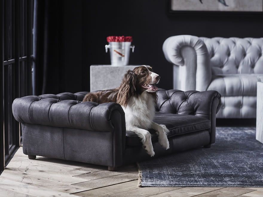 Chesterfield Redux Timothy Oulton Dog Bed Chesterfield Leather Wall
