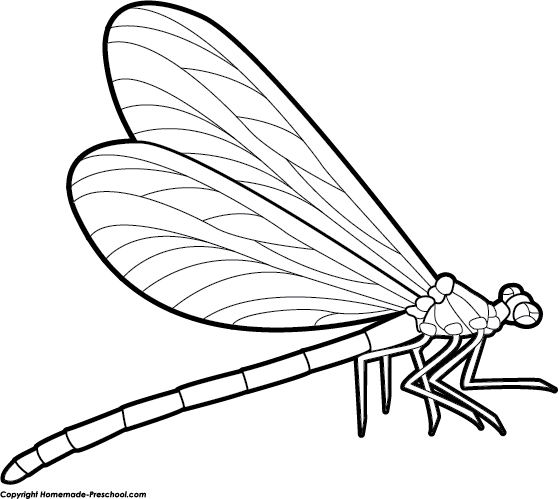 Clipart Dragonfly Drawing Dragonfly Clipart Insect Coloring Pages