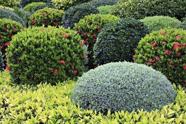 Plantas De Jardín 5 Plantas De Flores Perennes Para Embellecer El Jardín Nuevo Decoracion Flores Perennes Arbustos De Hoja Perenne Arbustos