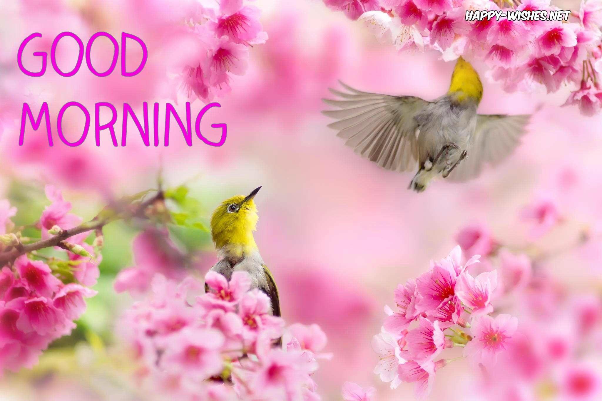 25 Good Morning Nature Images Beautiful Images Nature Beautiful Nature Spring White Eyes