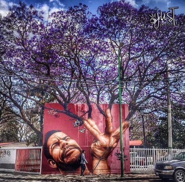 Foto Del Giorno Quando La Street Art Incontra La Natura Street
