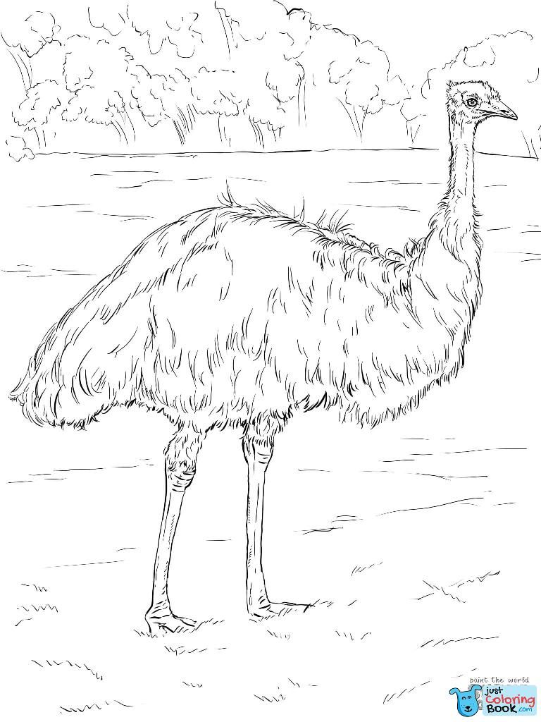 Realistic Emu Coloring Page Free Printable Coloring Pages Intended